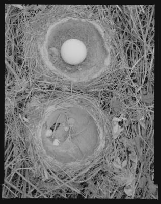 Twin Nests