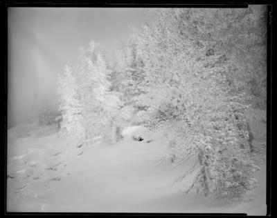 Winter Storm Vortex